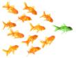 expanding leadership