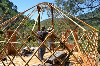 Yurt pitching 4